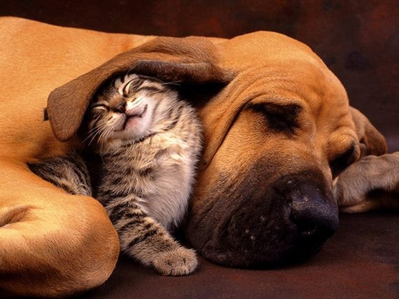 01-cats_and_dogs.thumb.jpg.bd33bbb0f91dd