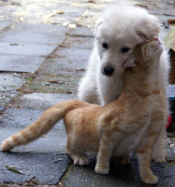 07-cats_and_dogs.jpg