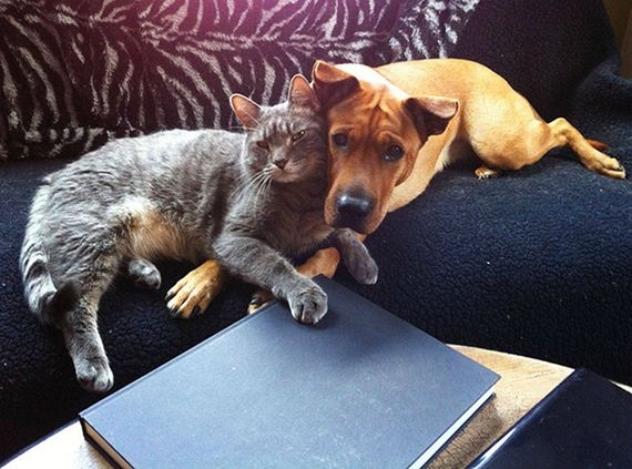08-cats_and_dogs.jpg
