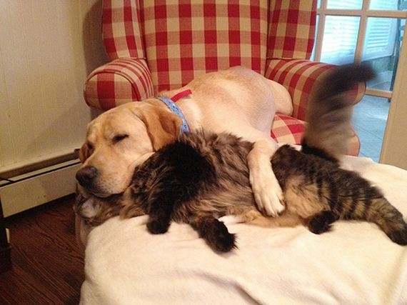 09-cats_and_dogs.jpg