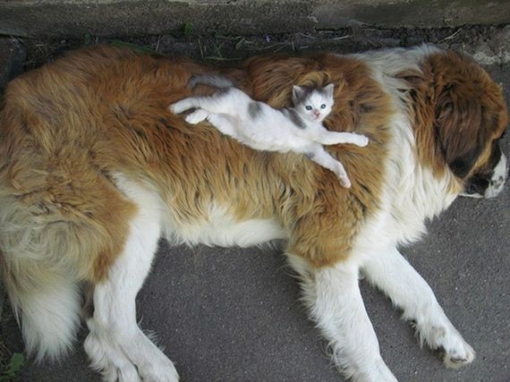 19-cats_and_dogs.jpg