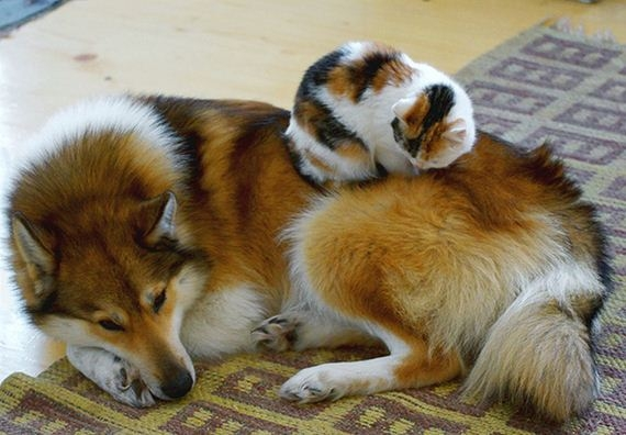 23-cats_and_dogs.jpg