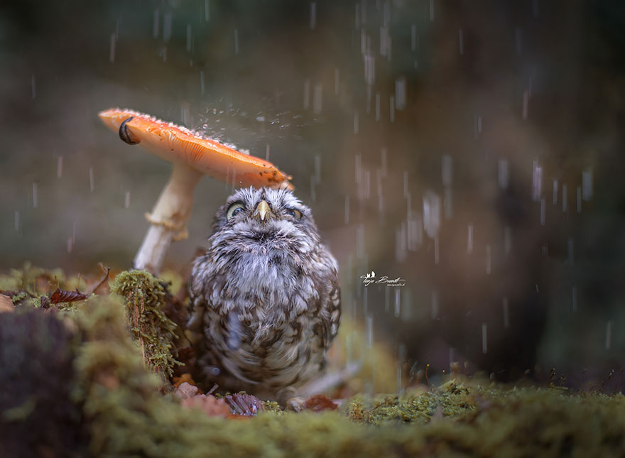 owl-and-mushrooms-tanja-brandt-1__880.jpg