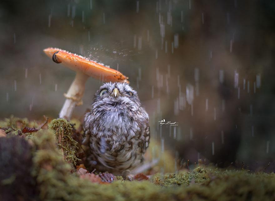 owl-and-mushrooms-tanja-brandt-1__880.jpg