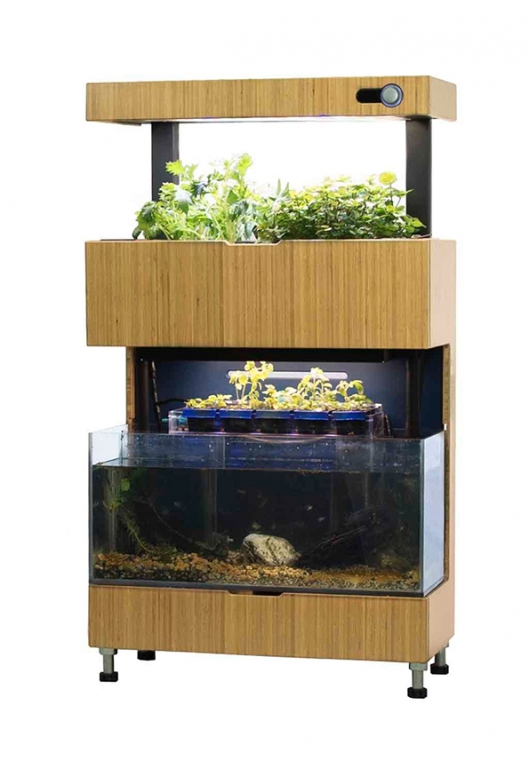 self-sustaining-garden-aquarium-1.jpg