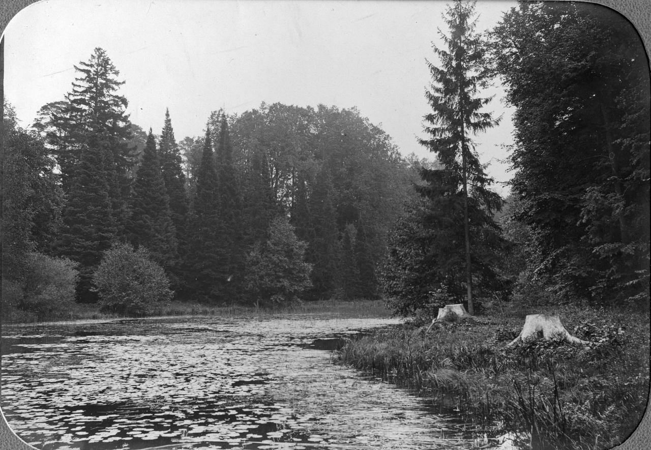 Уголок дендрария у Лилейного пруда.jpg