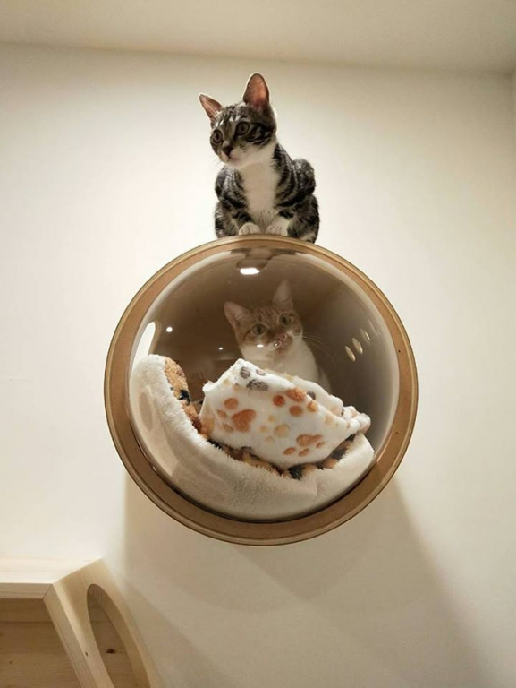 cat-spaceship-bed-myzoostudio-5bb6032e5e284__700.jpg