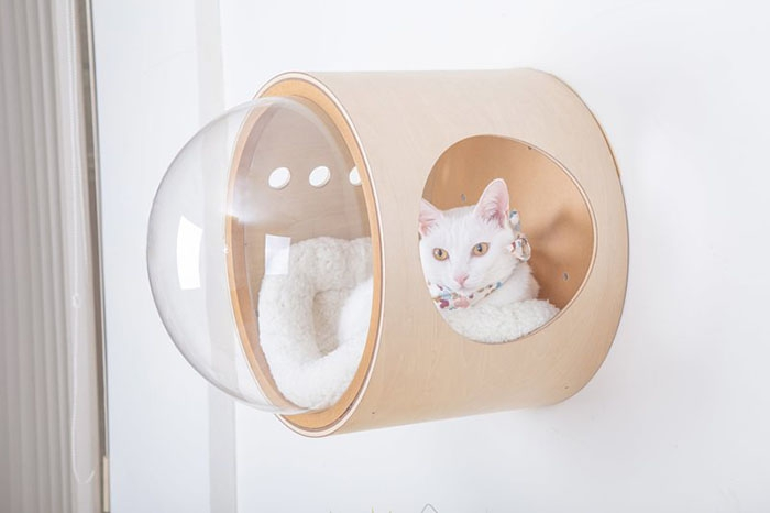 cat-spaceship-bed-myzoostudio-5bb6034850bfb__700.jpg