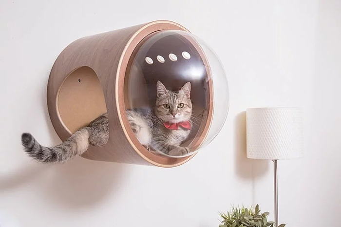 cat-spaceship-bed-myzoostudio-7-5bb5f8b499953-png__700.jpg