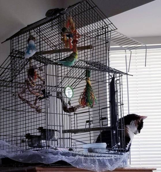 cats_dont_care_about_human_logic-12[1].jpg