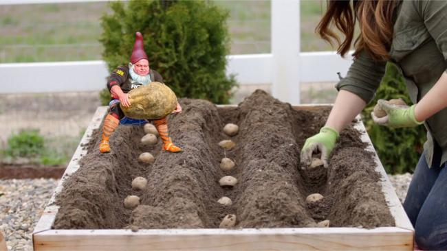 strongman-lifting-the-worlds-largest-potato-erupts-into-_013.jpg