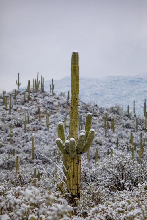 unusual-weather-snow-arizona-5c3f201907e0d__700.jpg