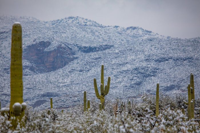 unusual-weather-snow-arizona-5c3f201b1e7cb__700.jpg