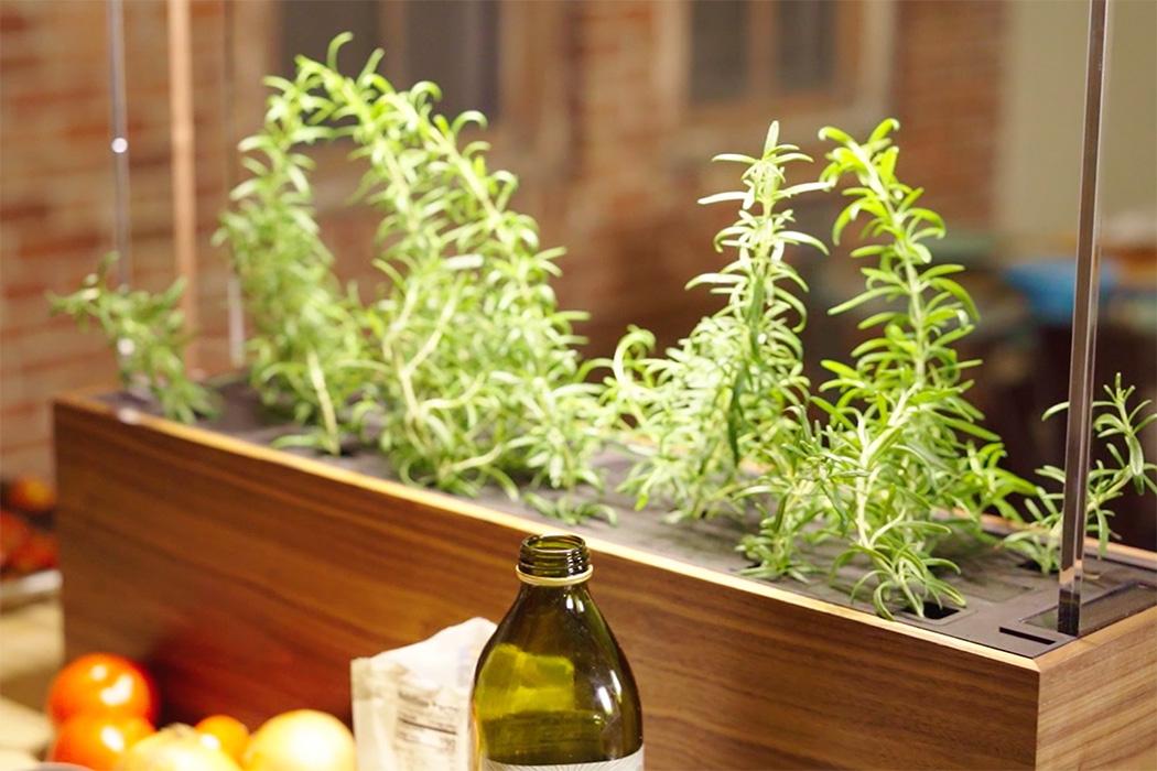 herb-garden10.jpg