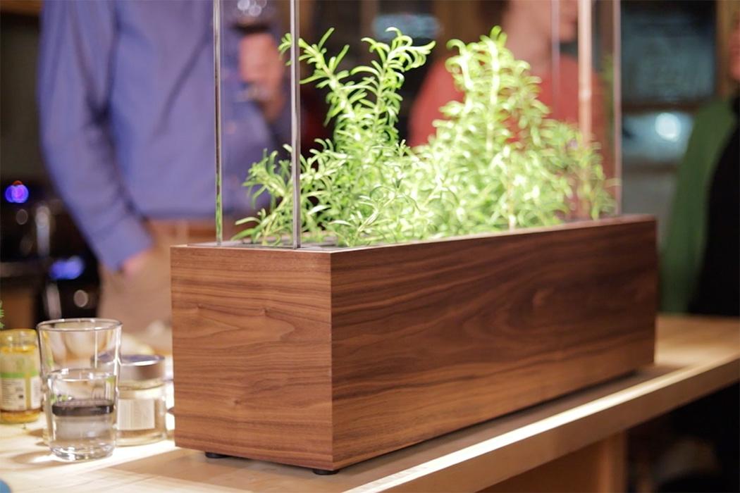 herb-garden5.jpg