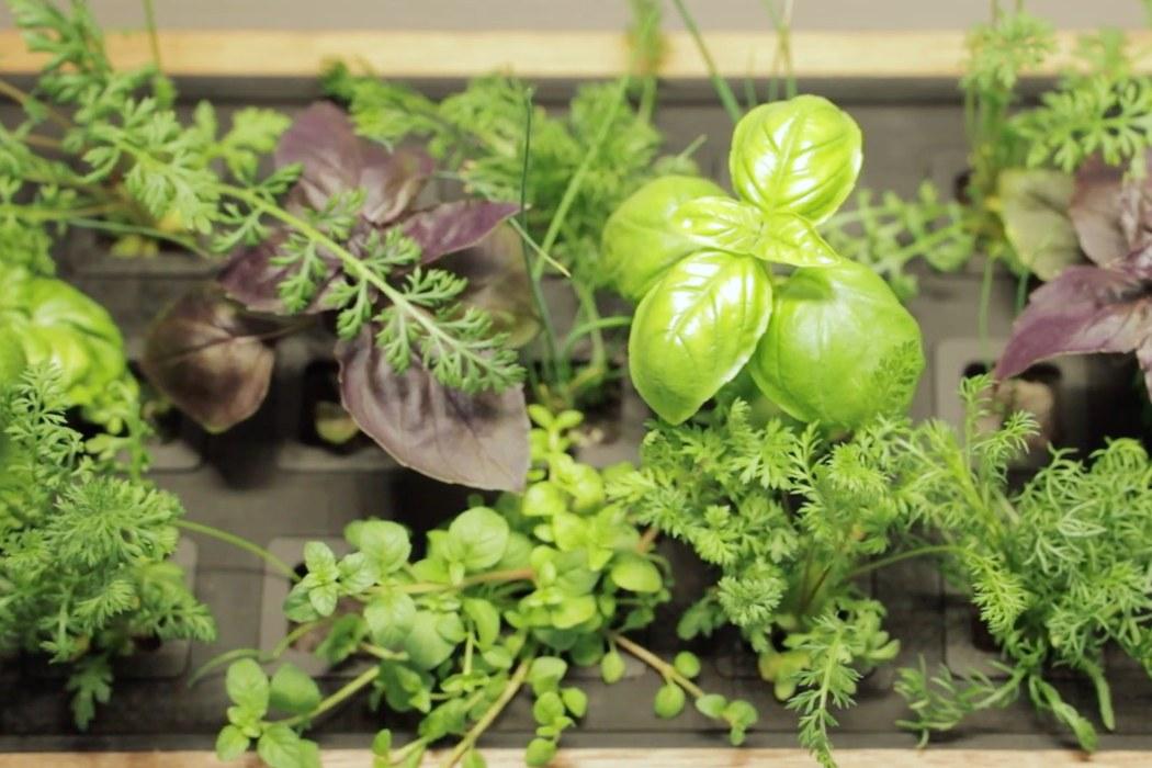 professional_grade_automatic_indoor_garden_for_growing_vegetables_06.jpg
