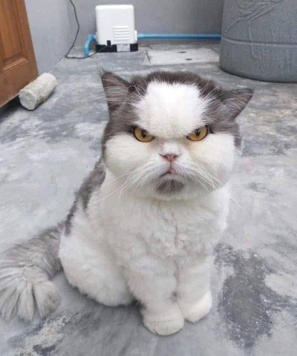 Hilarious-Cats-5[1].jpg