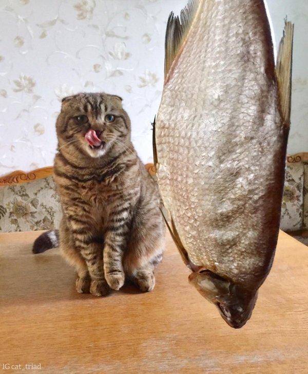 Hilarious-Cats-24[1].jpg