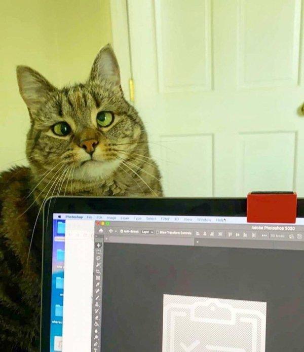 Hilarious-Cats-11[1].jpg