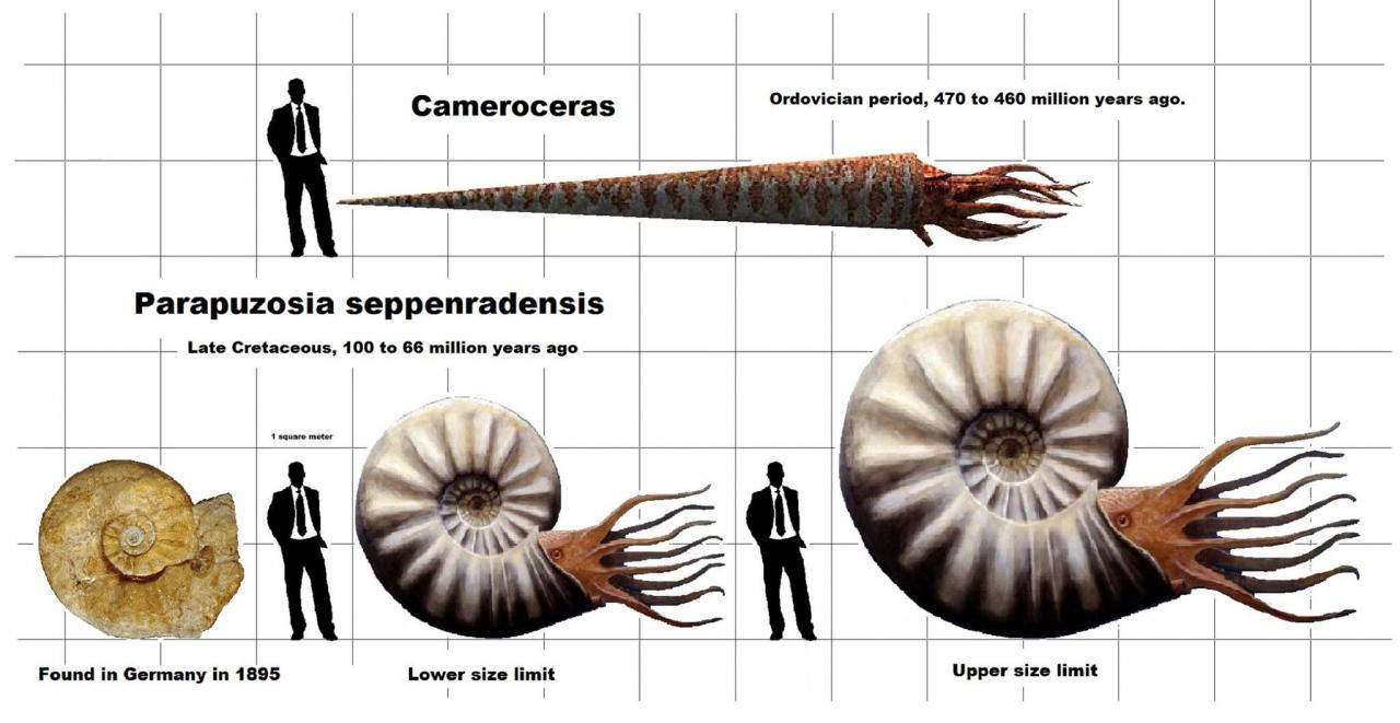 71278231_ancient_cephalopods1.thumb.jpg.5332f943d697419d72b008f642178d4b.jpg